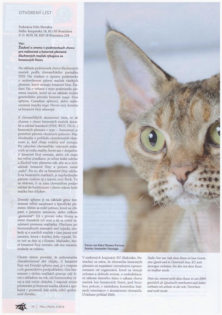 Prečo naša mačka nemusí mať fúzy   - Mystery Fortuna SK 19b3badfdc9